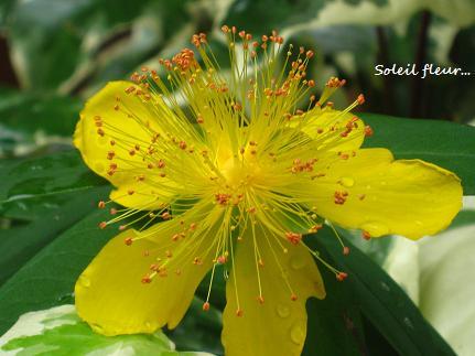 花への道、歩き始めた季節に・・・☆_c0098807_20273074.jpg