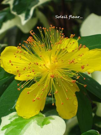 花への道、歩き始めた季節に・・・☆_c0098807_2038263.jpg