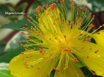 花への道、歩き始めた季節に・・・☆_c0098807_2056766.jpg