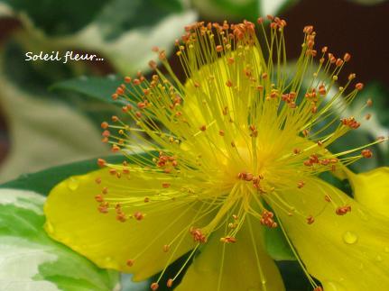 花への道、歩き始めた季節に・・・☆_c0098807_21314928.jpg