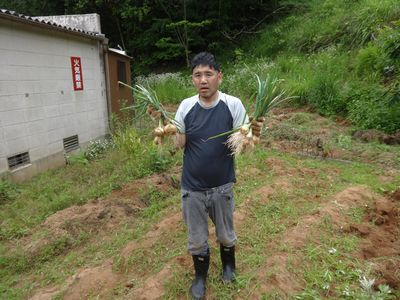 ジャガイモと玉ねぎの収穫(^o^)/_a0154110_16352248.jpg