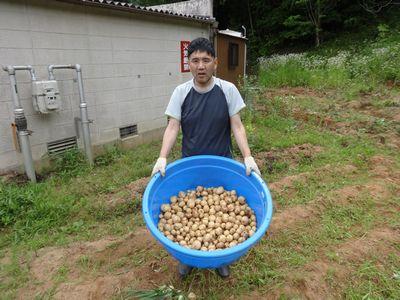 ジャガイモと玉ねぎの収穫(^o^)/_a0154110_16353311.jpg