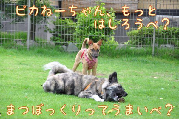 f0329311_15153959.jpg