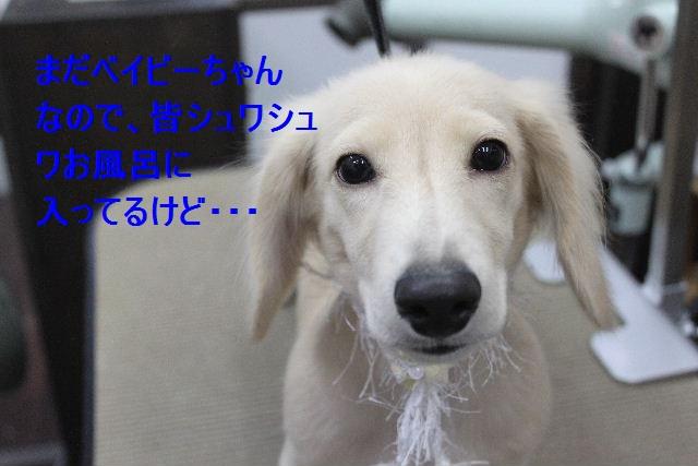 b0130018_1527272.jpg