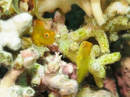 可愛い幼魚がいっぱい♪_a0189838_2531876.jpg