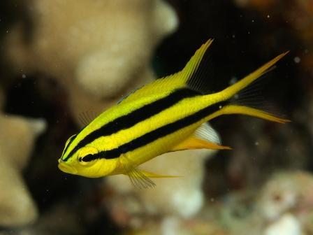 可愛い幼魚がいっぱい♪_a0189838_254492.jpg