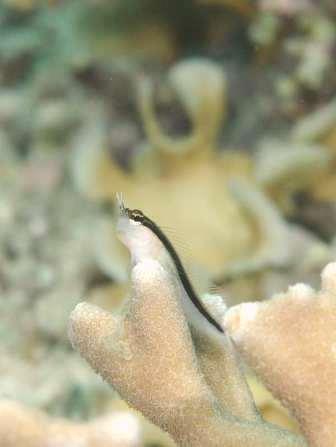 可愛い幼魚がいっぱい♪_a0189838_2551527.jpg