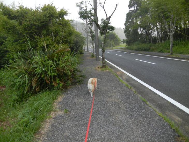 '14,6、17(火)久しぶりに田舎道に行ったよ~!_f0060461_84296.jpg