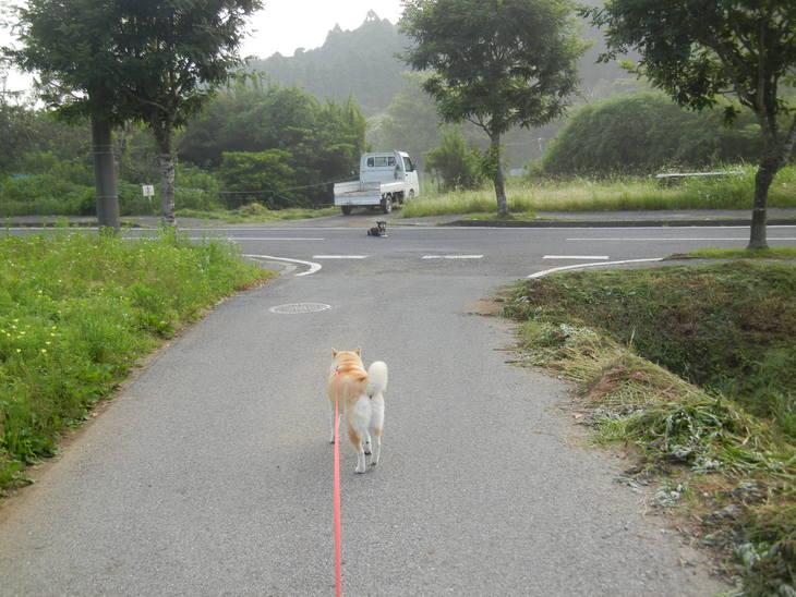 '14,6、17(火)久しぶりに田舎道に行ったよ~!_f0060461_8492161.jpg