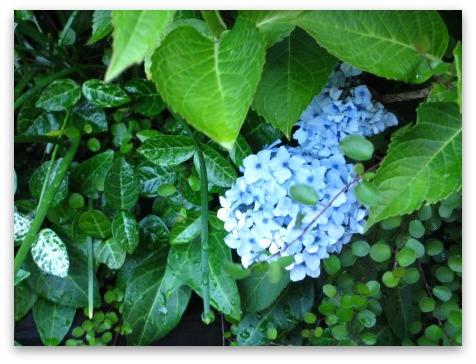今は落ち着いた感じの庭です_a0243064_20191666.jpg