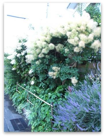 今は落ち着いた感じの庭です_a0243064_20224925.jpg