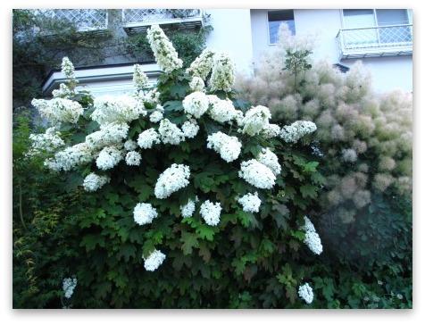 今は落ち着いた感じの庭です_a0243064_20225782.jpg