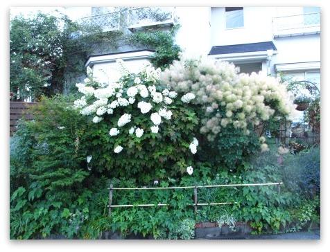 今は落ち着いた感じの庭です_a0243064_20230350.jpg