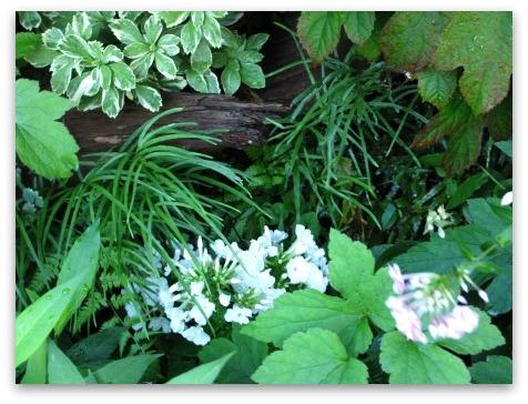 今は落ち着いた感じの庭です_a0243064_20245226.jpg