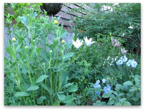 今は落ち着いた感じの庭です_a0243064_20323109.jpg