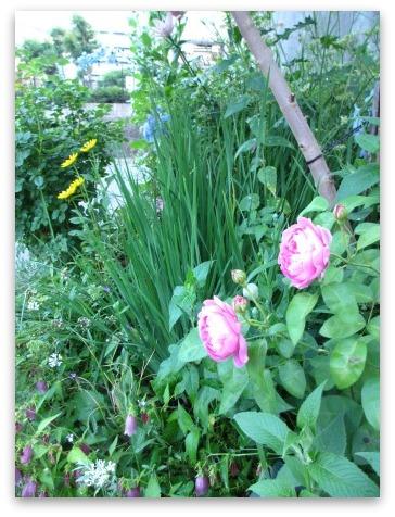今は落ち着いた感じの庭です_a0243064_20344357.jpg