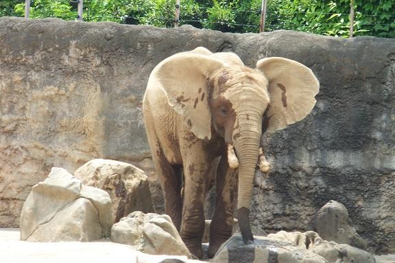 多摩動物公園_e0272869_16140901.jpg