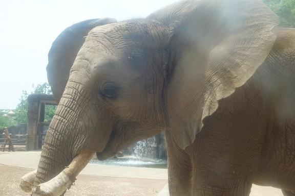 多摩動物公園_e0272869_16233667.jpg