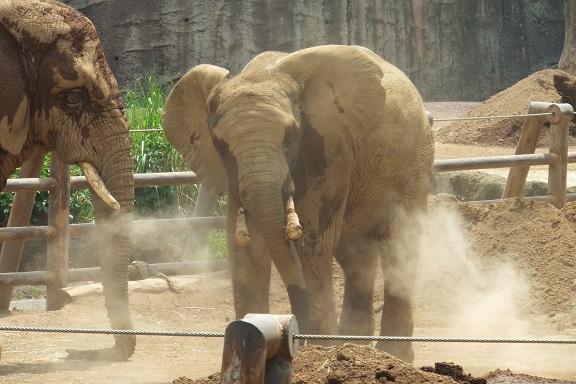 多摩動物公園_e0272869_16320644.jpg