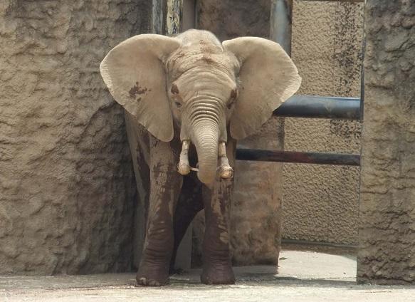多摩動物公園_e0272869_16413730.jpg