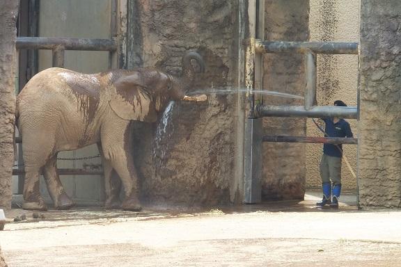 多摩動物公園_e0272869_16490069.jpg