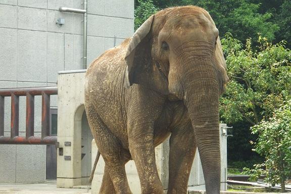 多摩動物公園_e0272869_17232200.jpg