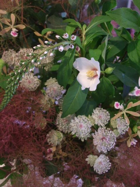 オークリーフ花の教室(赤地さんと宮原さんの作品)_f0049672_1742353.jpg