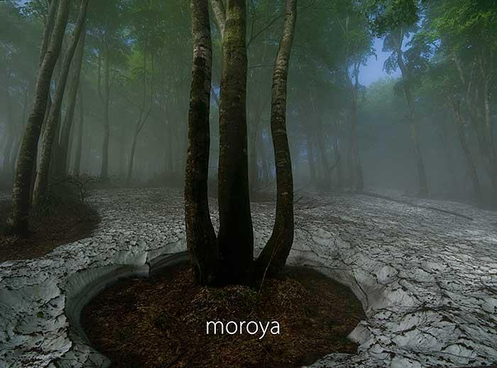 霧のブナ林_c0085877_1911769.jpg