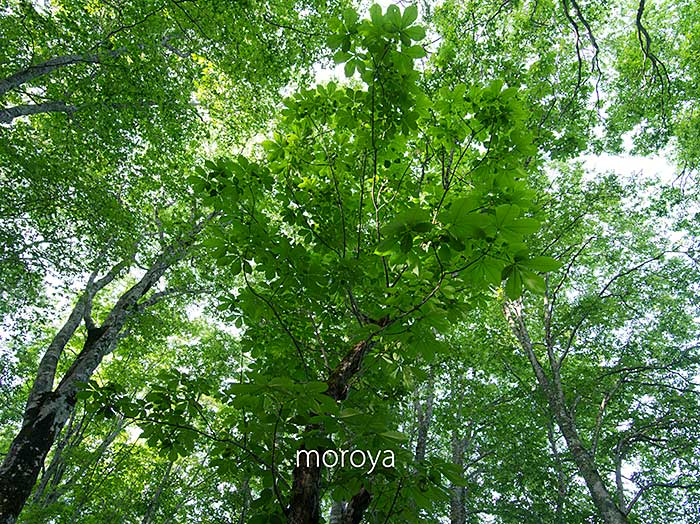新緑の森_c0085877_655311.jpg