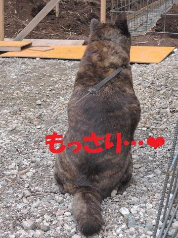 長坂町H野さん邸の現場より 7_a0211886_15563364.jpg