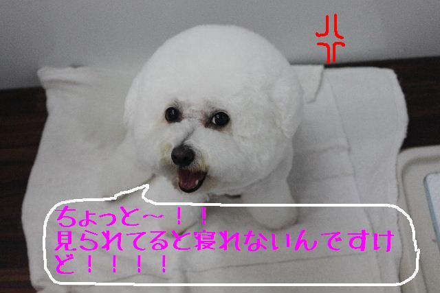 b0130018_16254482.jpg