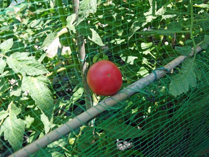 ジャガイモの保存に竹炭、タマネギには万能ネット袋使用_c0014967_7563475.jpg