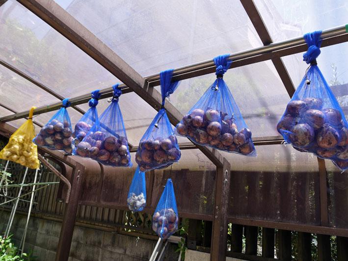 ジャガイモの保存に竹炭、タマネギには万能ネット袋使用_c0014967_7582414.jpg