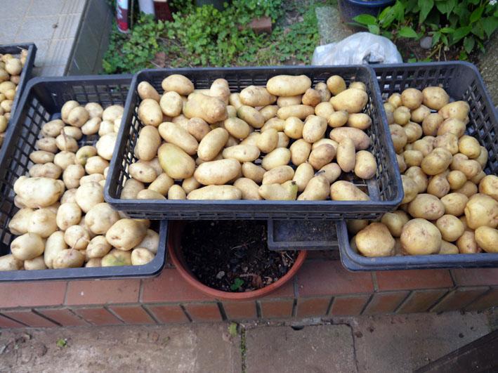 ジャガイモの保存に竹炭、タマネギには万能ネット袋使用_c0014967_8133.jpg