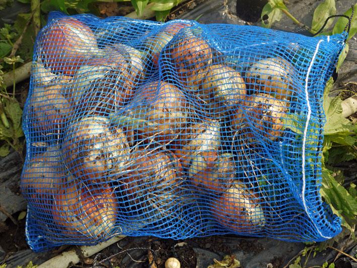 ジャガイモの保存に竹炭、タマネギには万能ネット袋使用_c0014967_814913.jpg