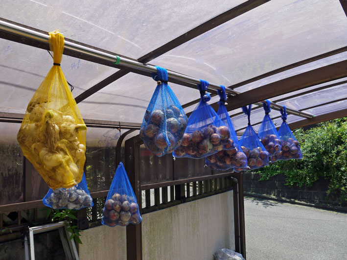 ジャガイモの保存に竹炭、タマネギには万能ネット袋使用_c0014967_893448.jpg