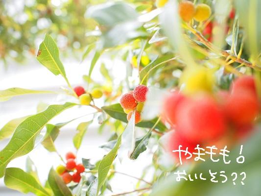 b0092580_3525939.jpg