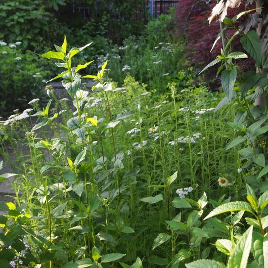 晴れの日の植物はピカピカ光ってる_a0292194_1854545.jpg