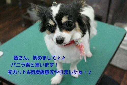 b0130018_94577.jpg