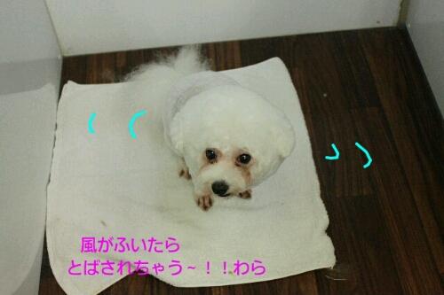 b0130018_9544568.jpg