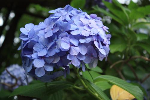 綺麗な花には毒がある_f0299418_00244295.jpg
