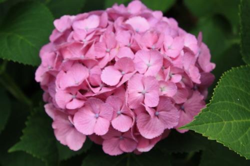 綺麗な花には毒がある_f0299418_00250129.jpg
