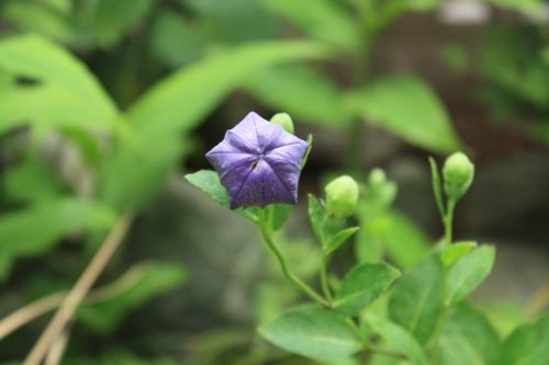 綺麗な花には毒がある_f0299418_00273371.jpg