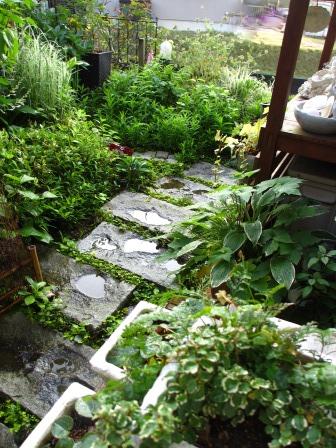 雨上がりの庭は緑が鮮やかですね_a0243064_07250604.jpg