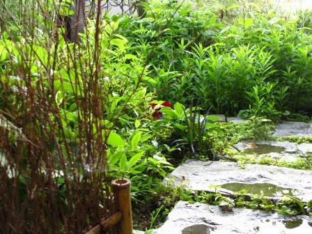 雨上がりの庭は緑が鮮やかですね_a0243064_07252320.jpg