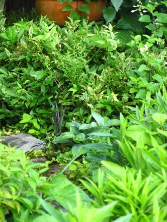 雨上がりの庭は緑が鮮やかですね_a0243064_07253350.jpg