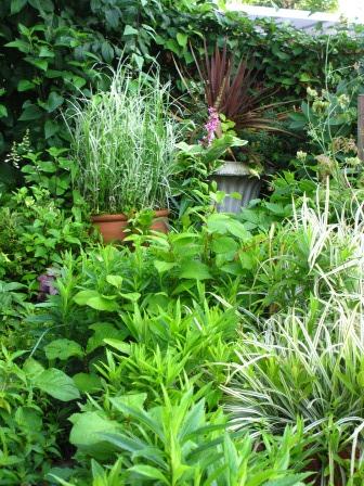 雨上がりの庭は緑が鮮やかですね_a0243064_07254348.jpg