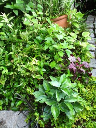 雨上がりの庭は緑が鮮やかですね_a0243064_07255887.jpg