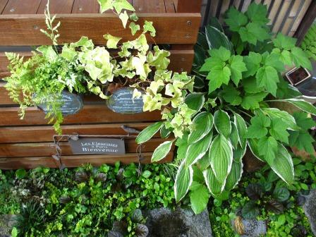 雨上がりの庭は緑が鮮やかですね_a0243064_07260975.jpg