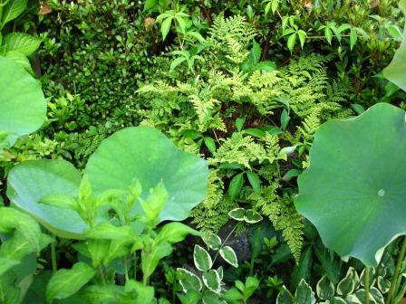 雨上がりの庭は緑が鮮やかですね_a0243064_07310596.jpg